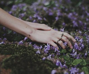 beautiful, flowers, and hand image