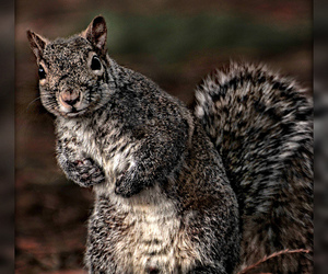 animal and squirrel image