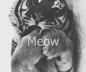 meow, tiger, and animal image