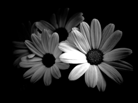 Melvins blog black and white flowers photography
