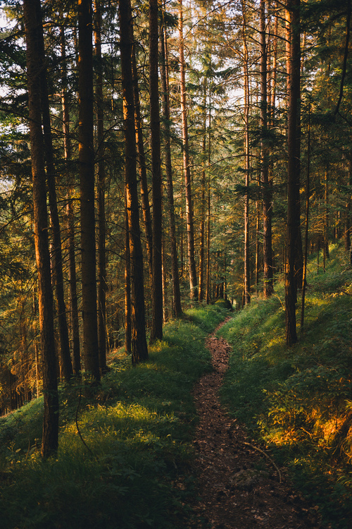 forest, path, and soir image