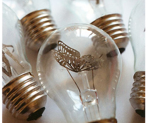 butterfly and light bulbs image