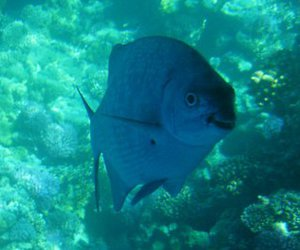 fish, smile, and sharm el sheikh image