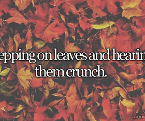 leaves, autumn, and crunch image