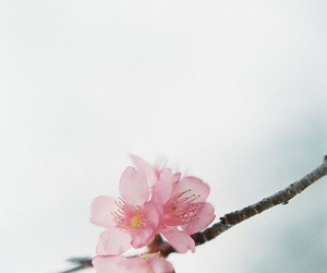 beautiful, cold, and flowers image