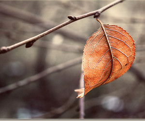 leaf, nature, and autumn image