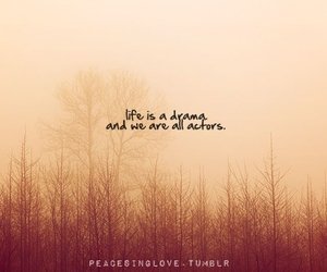 drama, forest, and life image