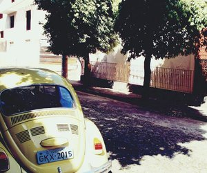 beautiful, beetle, and photo image