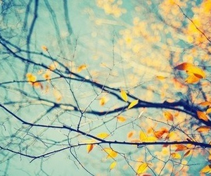 beautiful, tree, and leaf image