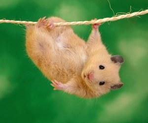 hamster, animal, and funny image
