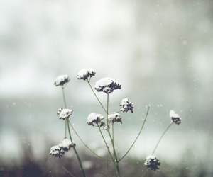 flowers, winter, and snow image