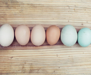 eggs, farm, and pastels image