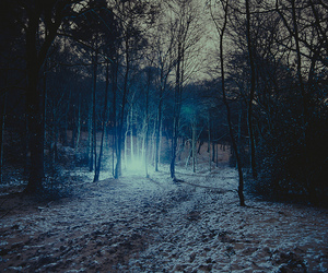 forest, tree, and light image