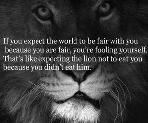 fair, lion, and world image