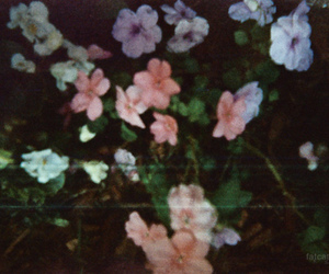 flowers, vintage, and photo image