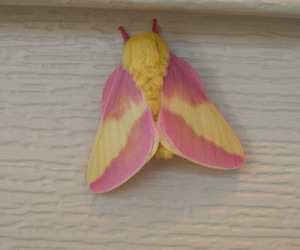 pink, yellow, and insect image