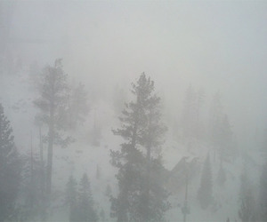 pale, fog, and winter image