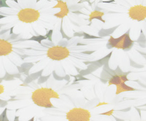 flowers, header, and pale image