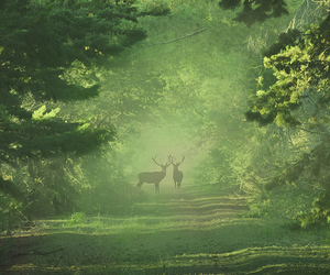 forest, deer, and green image