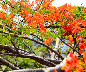 flower, thailand, and chiang mai image