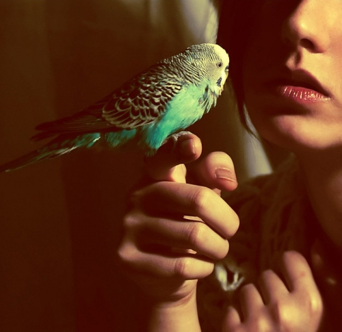 bird, girl, and blue image