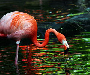 animal, flamingo, and photography image