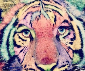 tiger, animal, and colors image