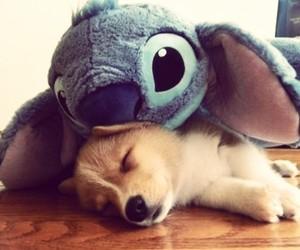 cute, dog, and stitch image