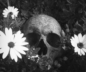 flowers, skull, and daisy image