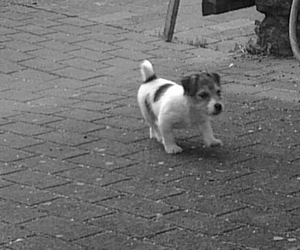 black&withe, dog, and cute image