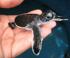 awww and sea turtle image