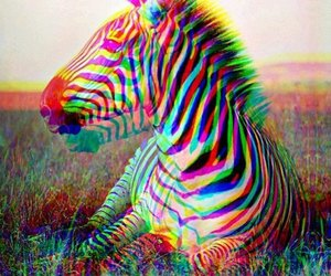 colors, picture, and zebra image