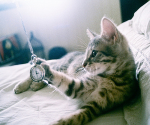 cat, animal, and clock image