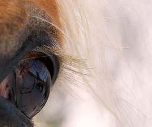 eye, animal, and horse image