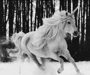 beautiful, snow, and horse image