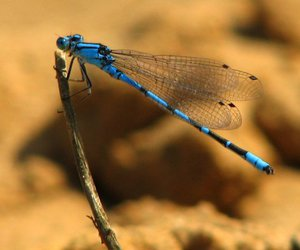 beautiful, branch, and dragonfly image