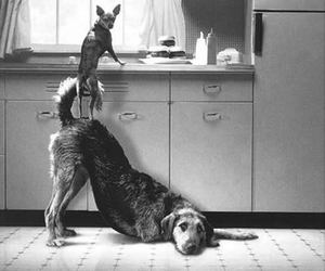dog, friends, and black and white image