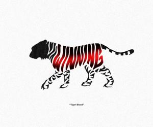 tiger, winning, and tiger blood image