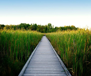 boardwalk, canada, and cattails image