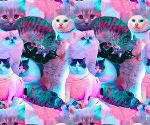 cat, pink, and hipster image