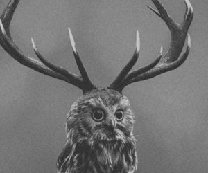 owl, black and white, and deer image