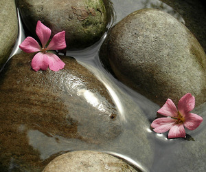 flowers, nature, and rock image