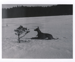 black and white, snow, and dog image