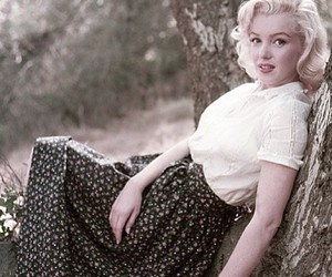 50s, Marilyn Monroe, and tree image