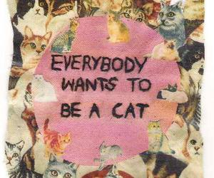 cat, quotes, and everybody image