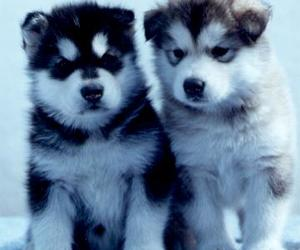 :3, cachorros, and <3 image