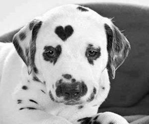 dog, heart, and cute image
