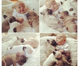 adore, aw, and baby dog image