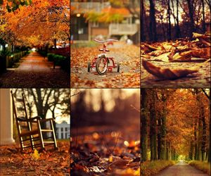 autumn, leaves, and park image