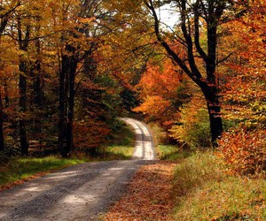 fall and trees image